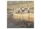 Κολυμβητικοί Αγώνες 1971, εκκίνηση